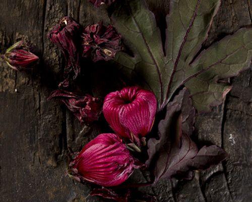 Evok flor jamaica destacada