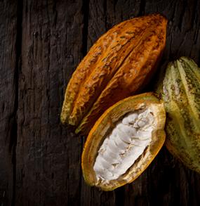 Evok cacao