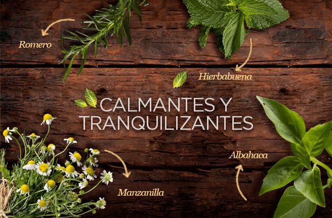 La manzanilla, la hierbabuena, la albahaca y el romero ayudan a relajar y tranquilizar el organismo.