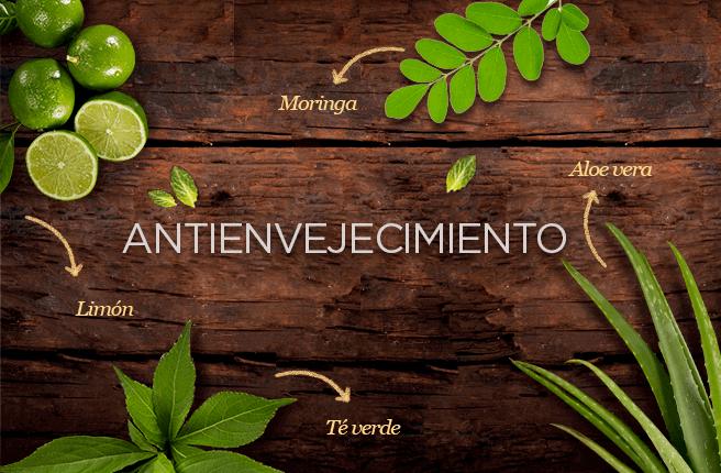El aloe vera, el limón, el té verde y la moringa previenen el envejecimiento prematuro.