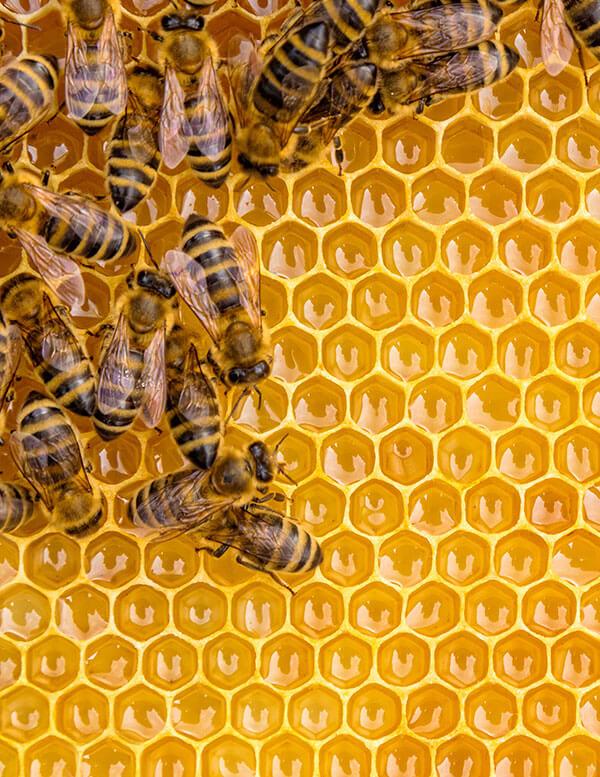 El color, aroma y sabor de la miel depende de los tipos de plantas de los que la abeja obtiene el néctar.